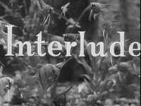 "Interlude ""Angel Fish"""